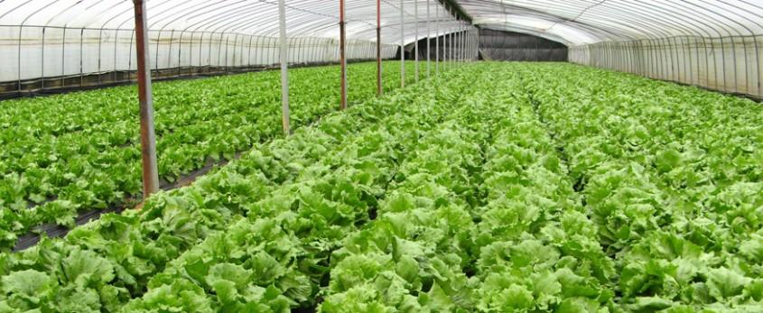 organic_farm_vegetables-80f30b172f